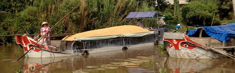 rice barge with Mekong eyes decoration waiting to deliver to rice factory in Vietnam
